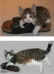 Преди и след котенце