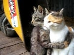 Прегърнати котки
