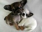 Прегърнати кученца