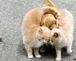 Прегърнати три котки