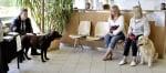 При ветеринаря