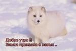 Снежко