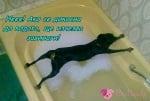 Приключения в банята