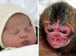 Принцеса Шарлот и маймунката