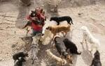 Приют за кучета в Китай