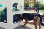 Проект за хранене на бездомните кучета в Истанбул