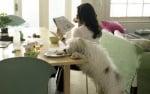 Професионално обучение на кучета