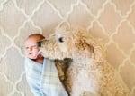 Пудел с бебе