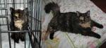 Пухкава котка преди и след приюта