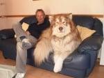 Пухкаво куче на дивана