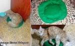 Пуловер за котка Елица Тодорова