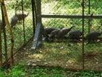 Пускат на свобода 6 токачки в парка на Старозагорските бани