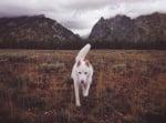 Пътешестващо куче