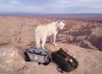 Пътуване с куче