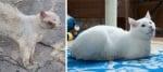 Ранена бяла котка