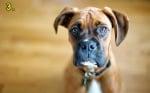 Разтапящ поглед на кучето ви