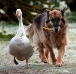 Рекс и Джералдин се разхождат