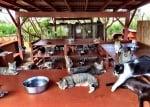 Резерват за котки в Хавай привлича посетители от цял свят