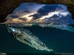Риба дракон