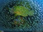 Риба с рибки