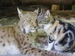 Рис и бездомно коте в зоопарк