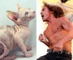 Рок певец като котка свинкс