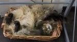 Рошава котка в кутия