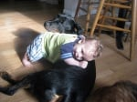 Ротвайлер с бебе