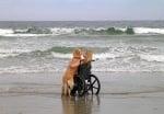 С куче на плажа