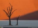 Самотни сухи дървета
