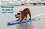 Сърфист