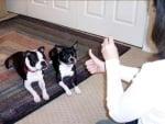 Съвети за глухо куче
