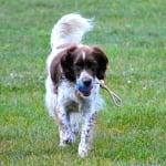 Съвети за игра с възрастно куче