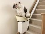 Съвети за обучение на куче на 5 години