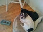 Съвети за осиновяване на куче
