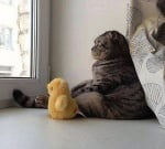 Седяща котка, която гледа през прозореца