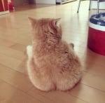 Седнала на пода котка