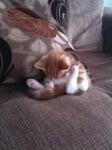 Седяща поза на сън