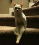 Седяща върху стълби котка