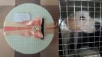 Българско семейство слагат кутия за дарения на сватбата си и успяват да спасят не малко невинни животинки