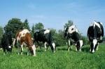"""Семинар """"Отглеждане и хранене в млечното и месодайното говедовъдство""""  с  гост лектори от САЩ"""