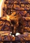Шарена котка на стълбище