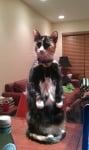 Шарена котка стои изправена