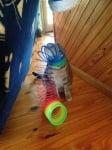 Шарена спирала за игра около главата на котка