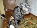 Шимпанзе сираче с приемна майка куче