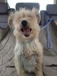 Щастливо осиновено куче