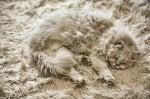 Сива котка на сиво одеяло