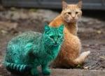 Синьо-зелена котка