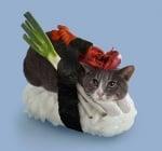 Сива котка с лук и омар върху суши