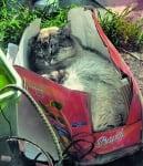 Сива котка в кутия